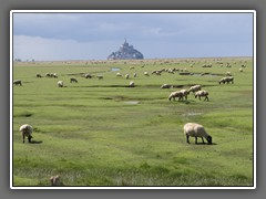 12.9 Mont St Michel, with pre-sale (meadow salted) lamb