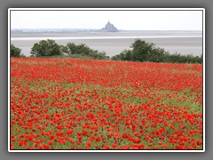 4.21 Vains, poppies and Mont St Michel,  summer 2012 31